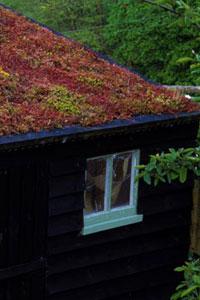 Un tetto verde anche per le case in città